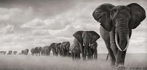 elefantes-micro-cuentos